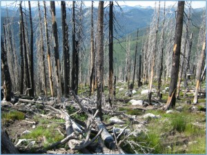 IdahoPanhandle_Behrens_2011_Pic3_Rx Burned Unit in Selkirk Mts.-Idaho - Stand level view